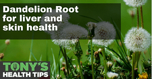 Dandelion root featured image